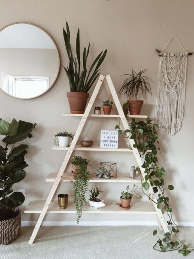 décoration echelle plantes vertes