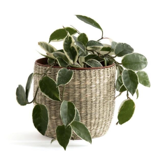 intérieur style nature cache-pot simple herbier