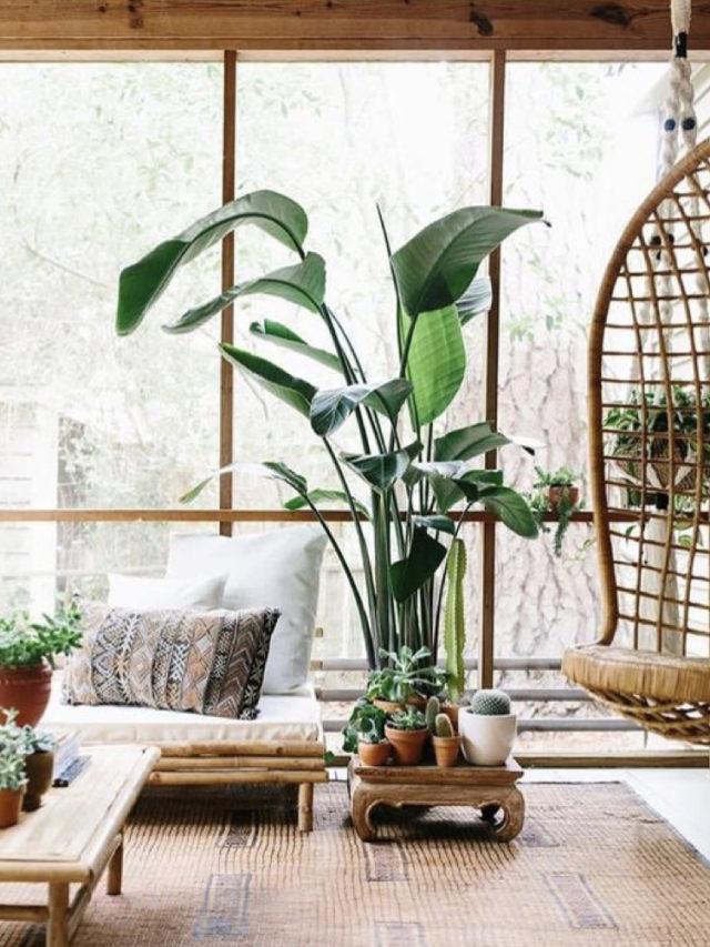 decoration nature chic tropical salon