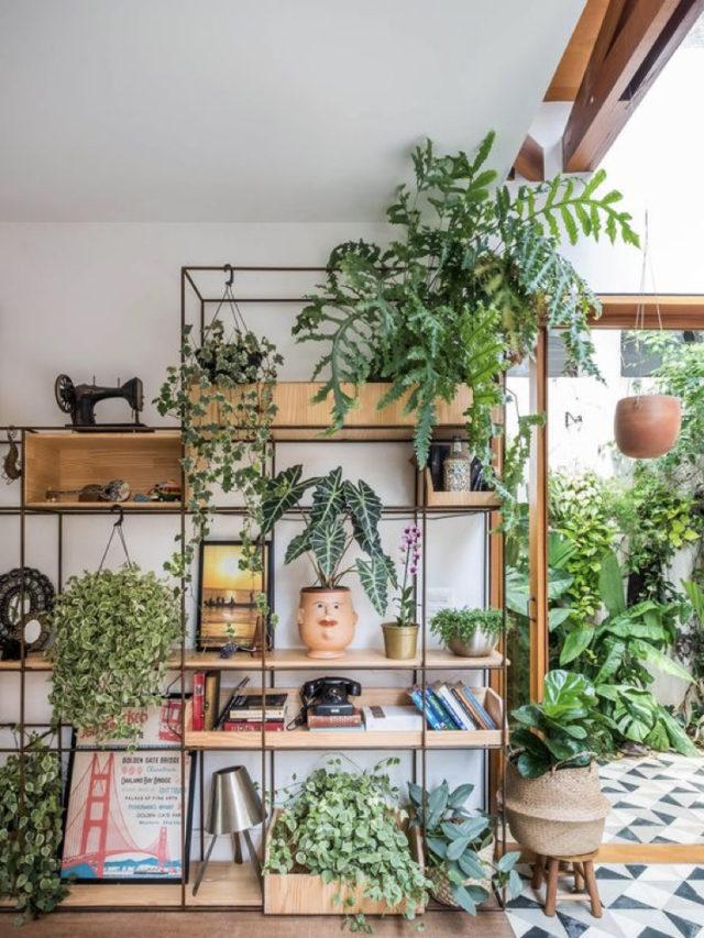 plante etagere bibliothèque salon