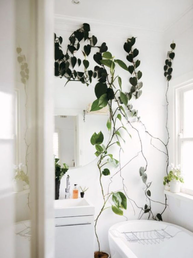 salle de bain plantes vertes mur