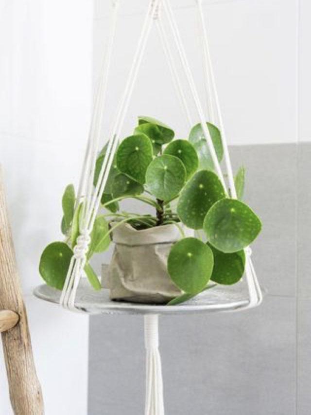 salle de bain petite plantes vertes etagere suspendue angle