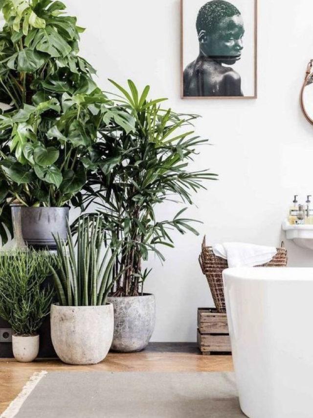 grande plantes vertes posées au sol de la salle de bain
