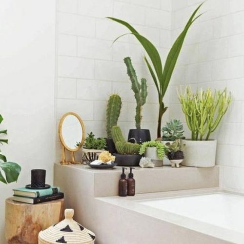 decoration baignoire plantes vertes