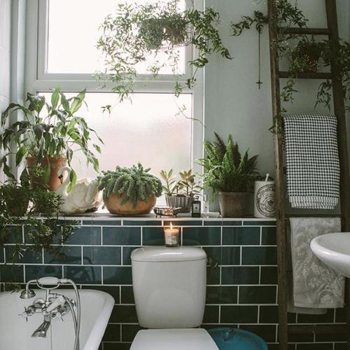 decoration rebord de fenetre plante verte