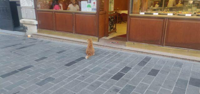 istanbul chat qui attend devant un commerce