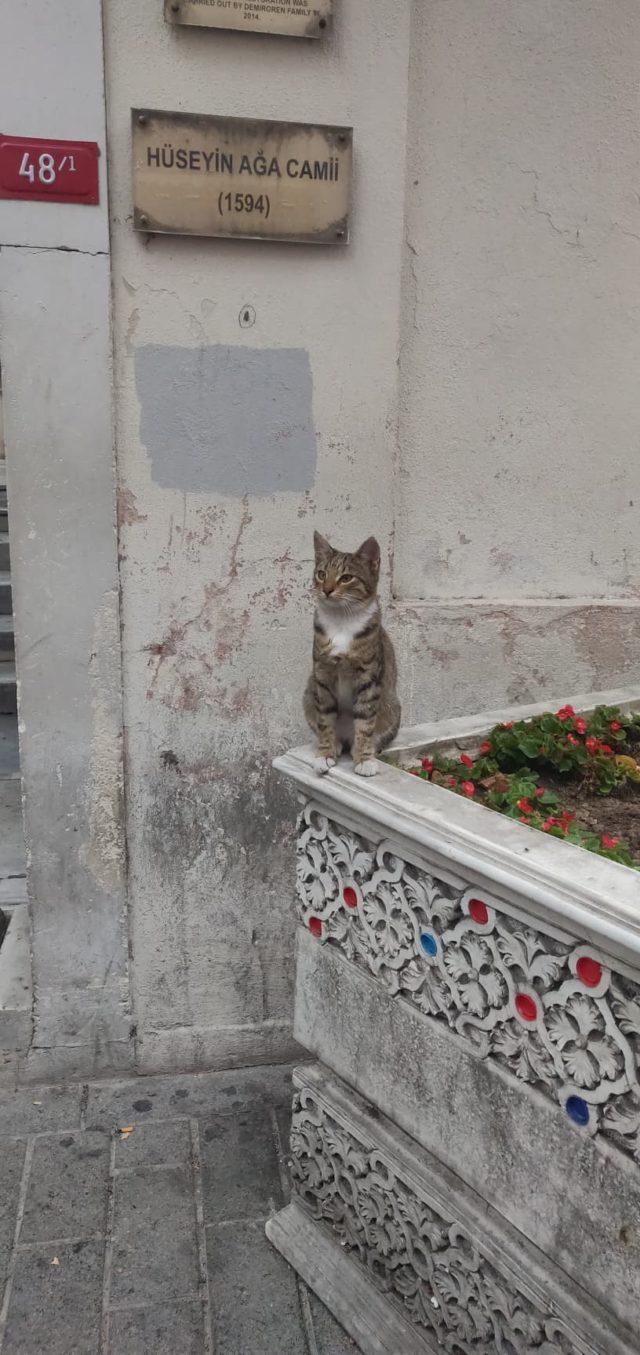 istanbul chat qui fait le beau