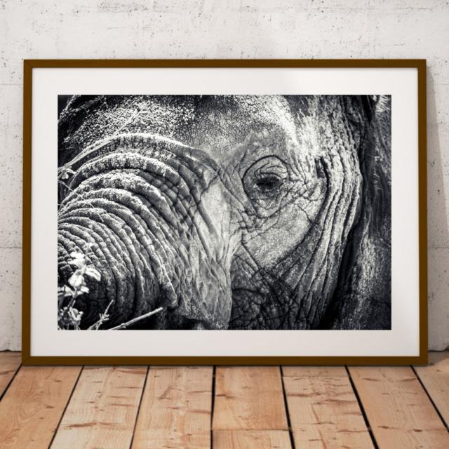 photo voyage éléphant fabrication française