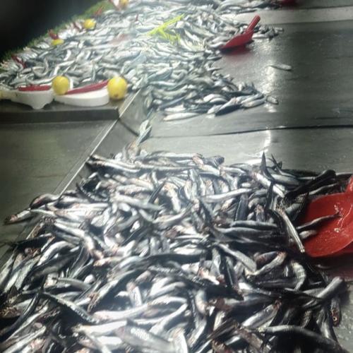 voyage en turquie on mange quoi marché local poisson