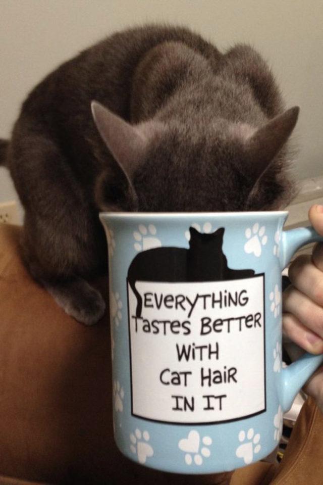 de la deco et des chats cafe mug message tout est meilleur avec un poil de chat dedans