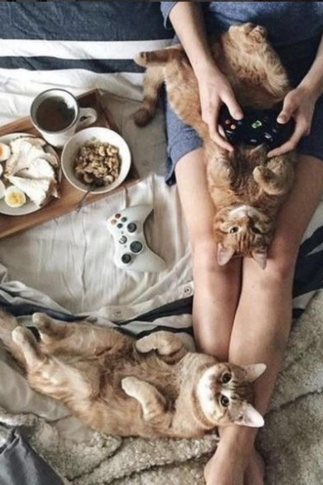 de la deco et des chats cafe instant cosy lit petit déj