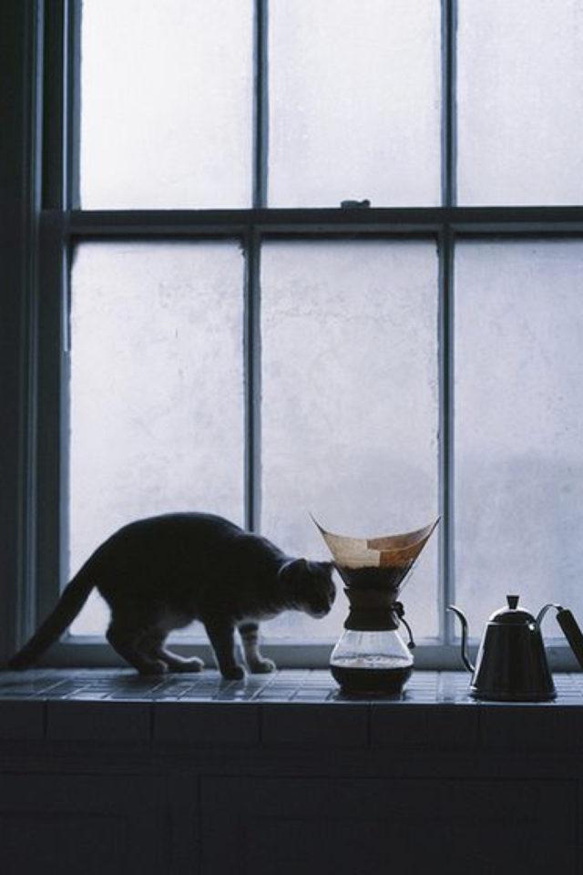 de la deco et des chats cafe photo en contrejour silhouette chat et cafetière