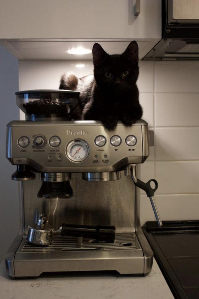 de la deco et des chats cafe chat noir posé sur une machine à expresso