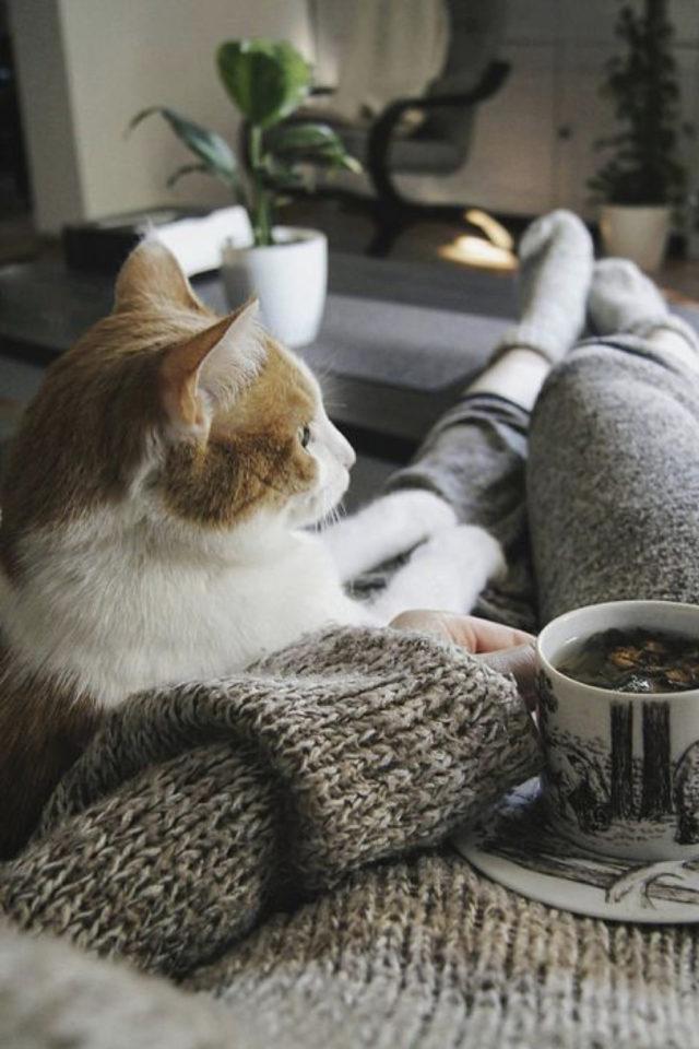 de la deco et des chats cafe dimanche canapé netflix cosy hiver