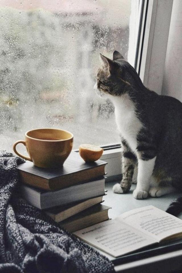 de la deco et des chats cafe fenêtre livre extérieur après midi pluie