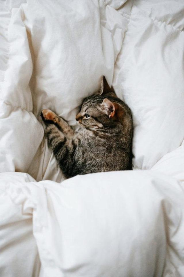 de la deco et des chats lit couette confort bien être cosy
