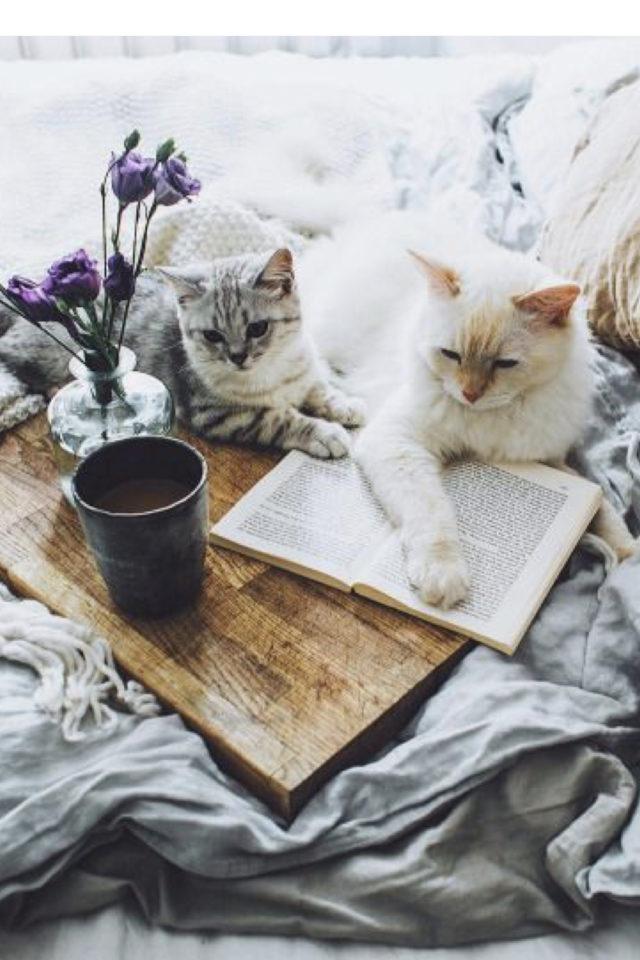 de la deco et des chats lit petit bouquet de fleurs et livre