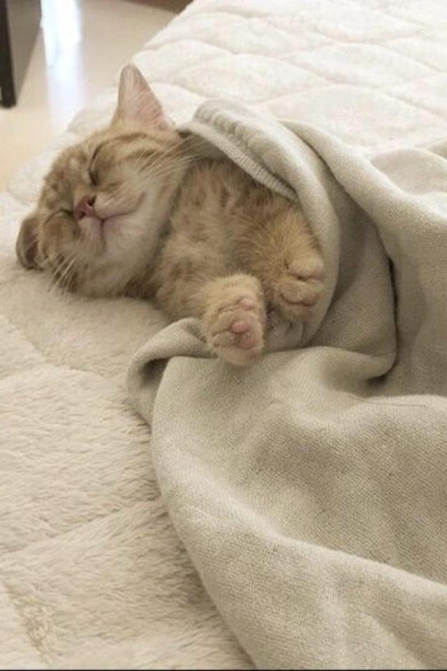 de la deco et des chats lit plaid en laine et matelas confortable