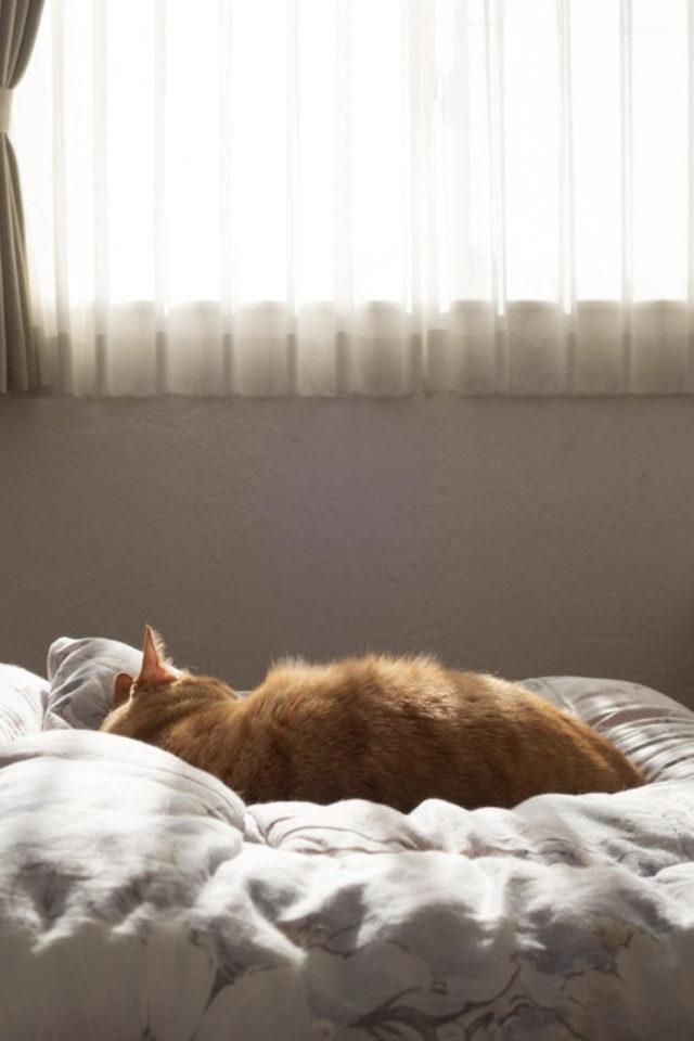 de la deco et des chats lit sommeil repos bien être confort chambre