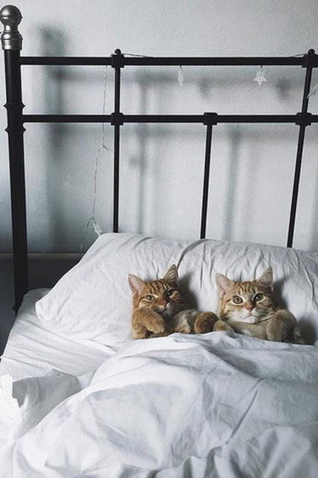 de la deco et des chats lit en métal vintage