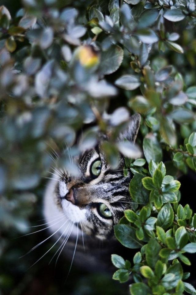 des chats et de la déco plantes vertes jardin arbuste