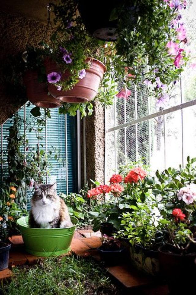 des chats et de la déco plantes vertes jardin d'hiver fleurs sceau
