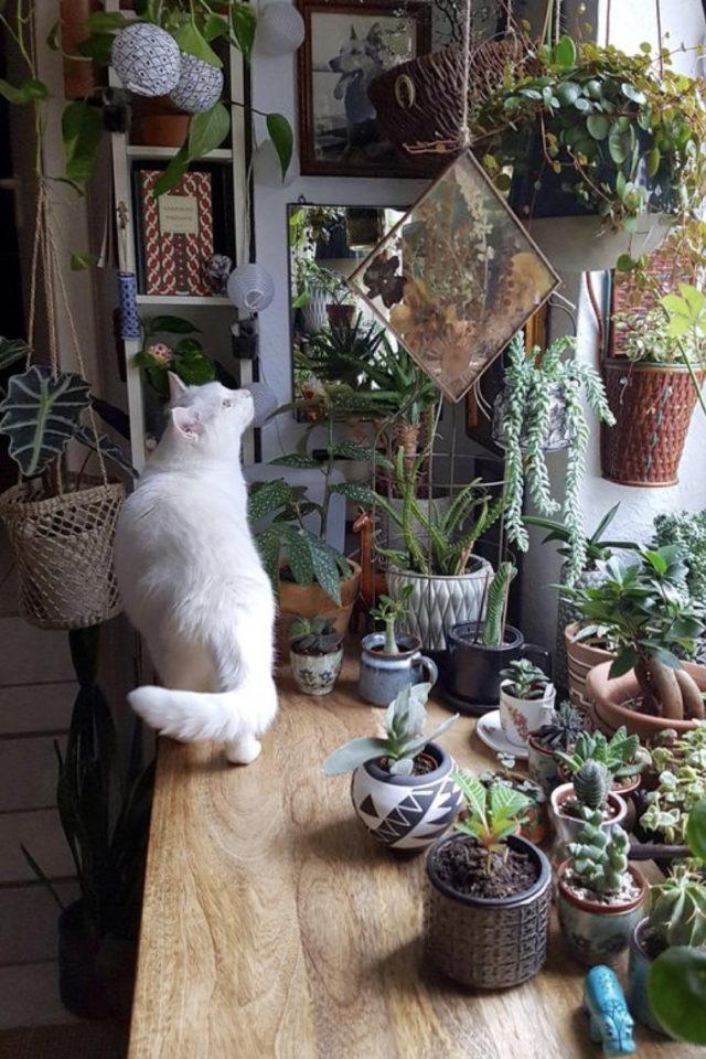 des chats et de la déco plantes vertes fenêtre plan de travail intérieur