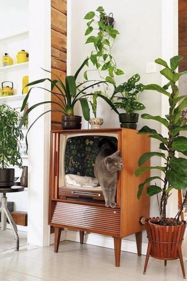 des chats et de la déco plantes vertes ancienne télé recup lit pour chat