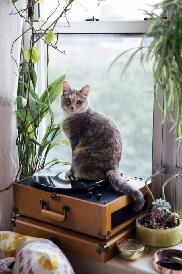 des chats et de la déco plantes vertes fenêtre platine vinyle vintage