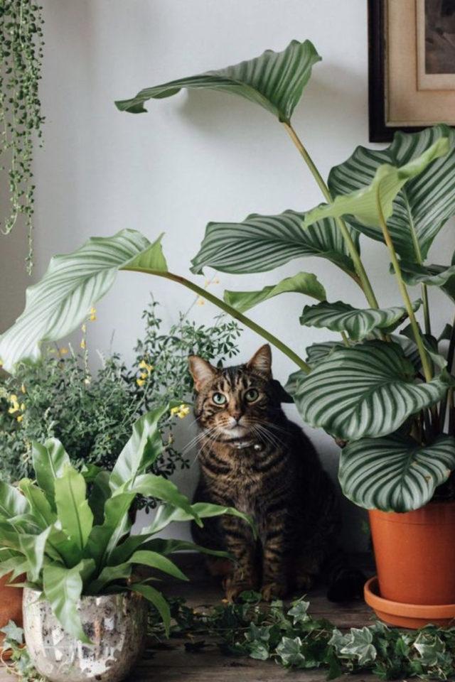 des chats et de la déco plantes vertes intérieur style urban jungle plantes tropicales