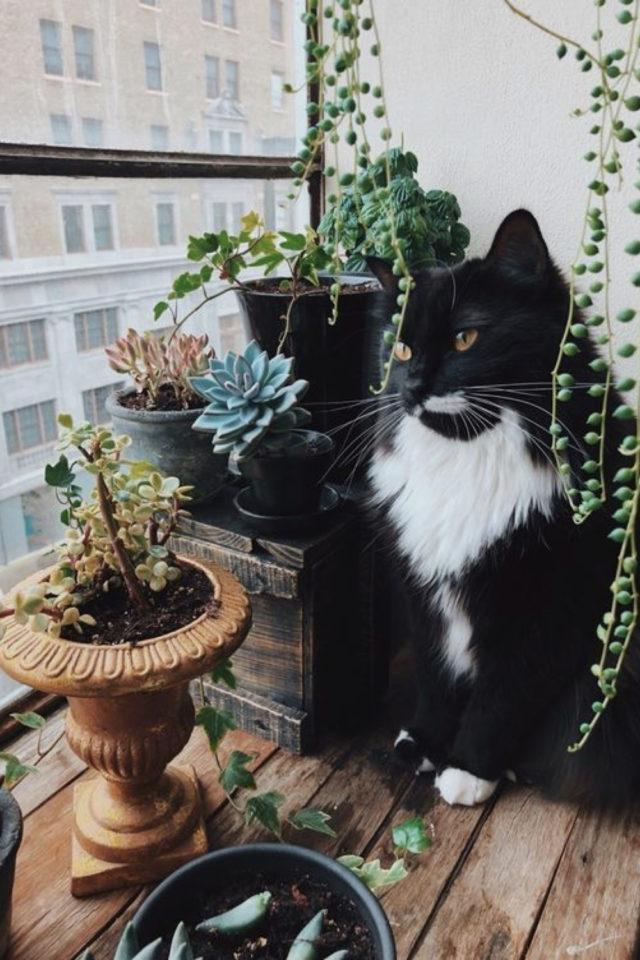 des chats et de la déco plantes vertes fenêtre lumière naturelle et extérieure