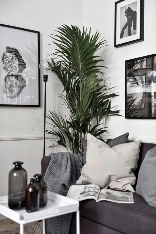 salon moderne gris blanc plantes intérieures tropicale décoration murale cadre