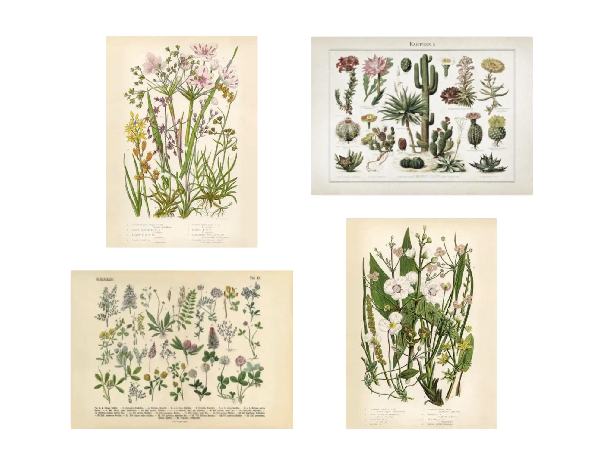 association affiche deco desenio exemple thématique nature herbier vintage affiche école musée plantes fleurs variétés