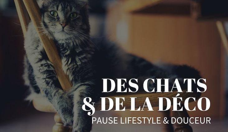 chats decoration intérieure pause idée inspiration blog déco