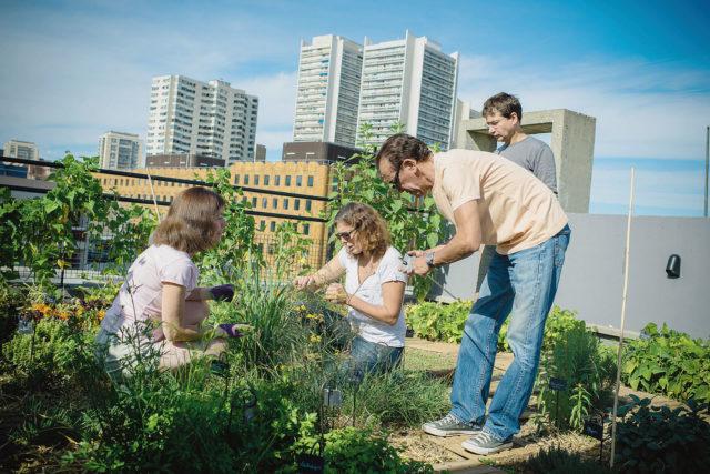 amenager toit immeuble jardin terrasse collectivité HLM vivre ensemble urbain