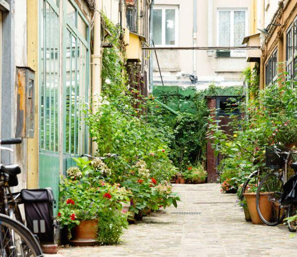 cour interieure immeuble plantes jardin végétal partagé