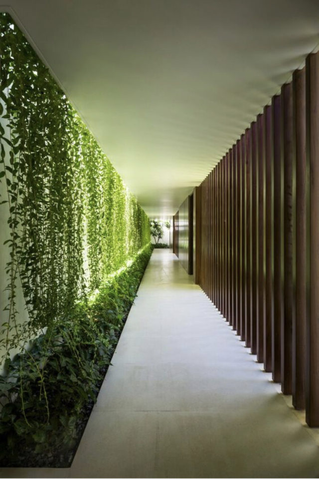 coursive immeuble plantes exemple claustra et plantes tombantes