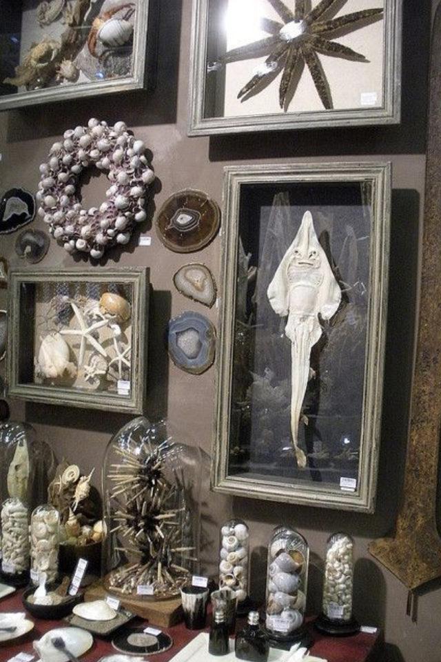 deco rock cabinet curiosite exemple décoration murale cadres objets collection naturalisme