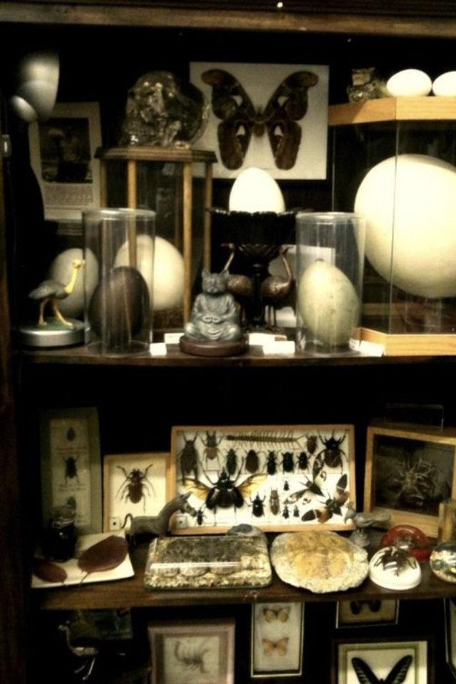 deco rock cabinet curiosite exemple naturalisme déco naturelle collection ancienne