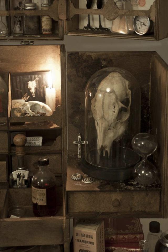 deco rock cabinet curiosite exemple crâne animal sous globe en verre collection naturelle souvenirs