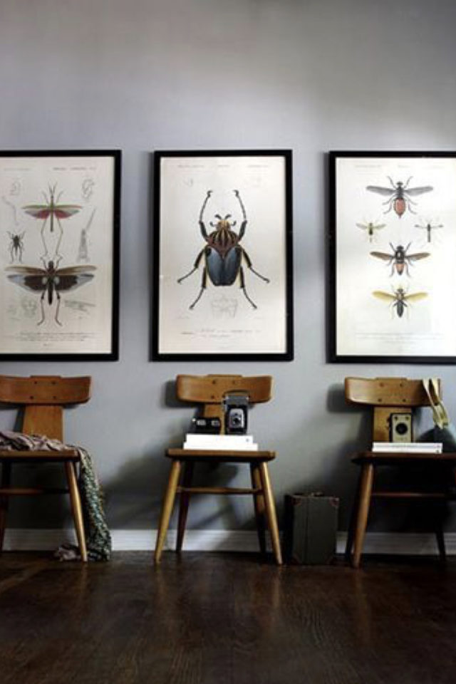 deco rock cabinet curiosite exemple decoration murale illustration insecte