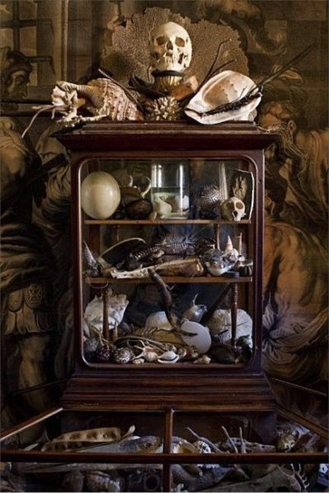deco rock cabinet curiosite exemple vitrine collection petits objets vanités