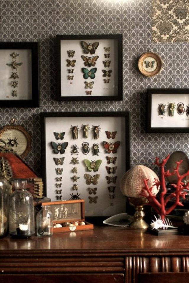 deco rock cabinet curiosite exemple décor mural papillon sous verre naturalisme découverte