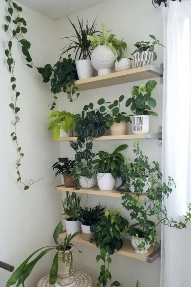 decoration etagere murale bois petit mur plantes verte mur végétal