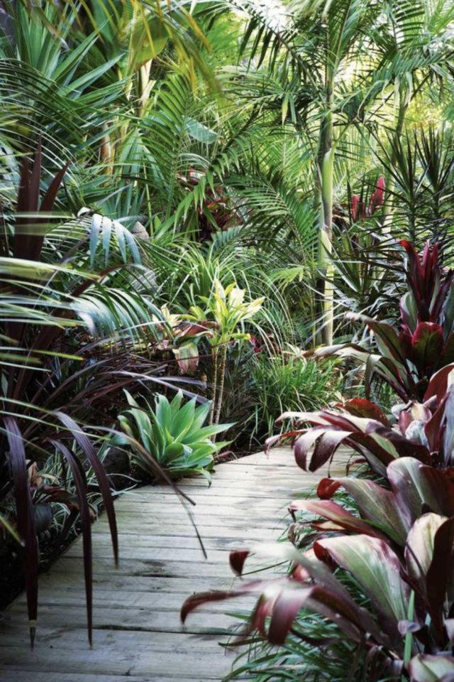 jardin tropical exemple allées plantes vertes exotiques