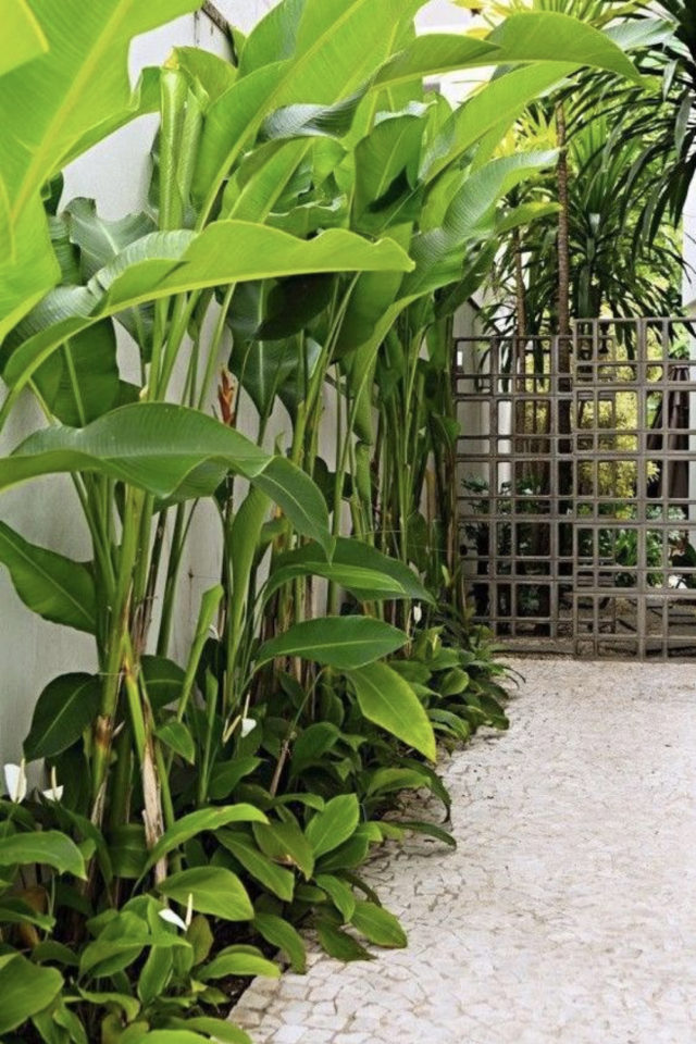 jardin tropical exemple bananier plantes vertes parterre