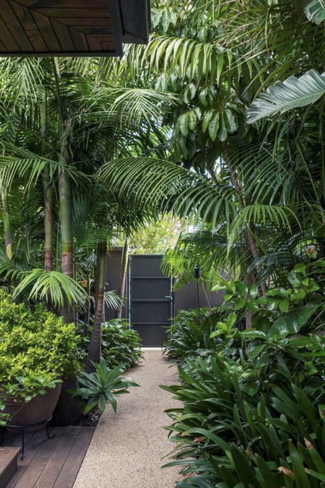 jardin tropical exemple arbre et plantes exotiques allées perspectives