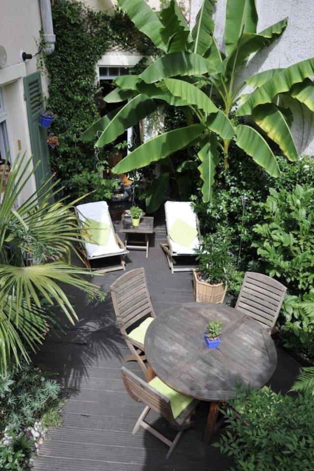 jardin tropical exemple salon extérieur patio plantes tropicale et exotique