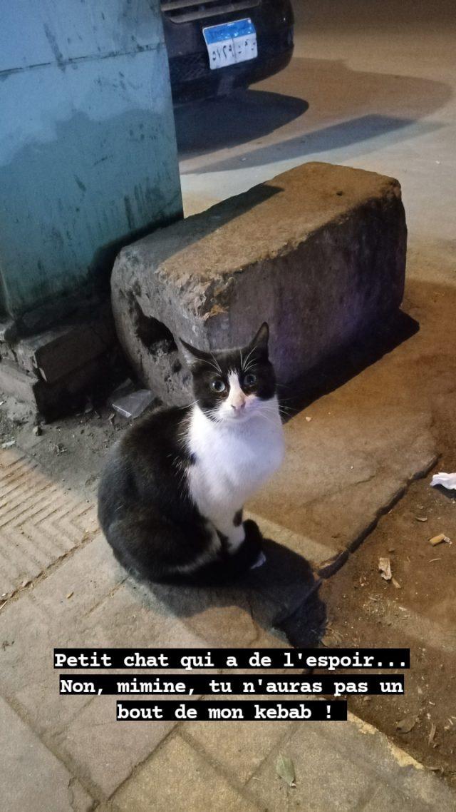 nomade egypte quotidien 2021 chat kekab le caire