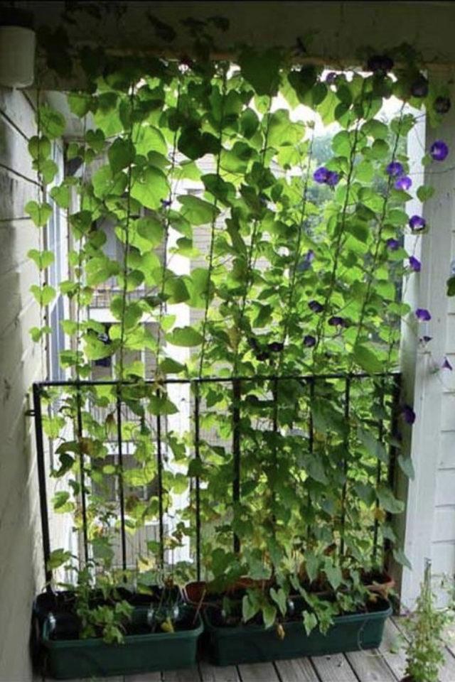 palier immeuble plantes vertes exemple plantes vertes grimpantes